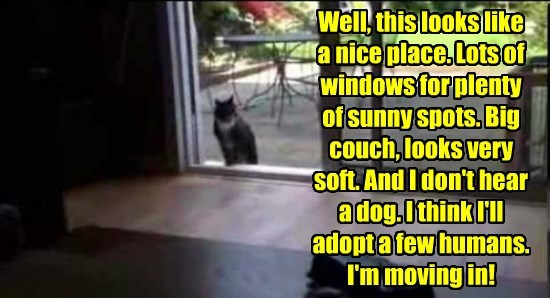 Well, this looks like  a nice place. Lots of windows for plenty  of sunny spots. Big couch, looks very soft. And I don't hear a dog. I think I'll adopt a few humans. I'm moving in!