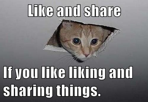 Like and share If you like liking and sharing things. - Memebase ...