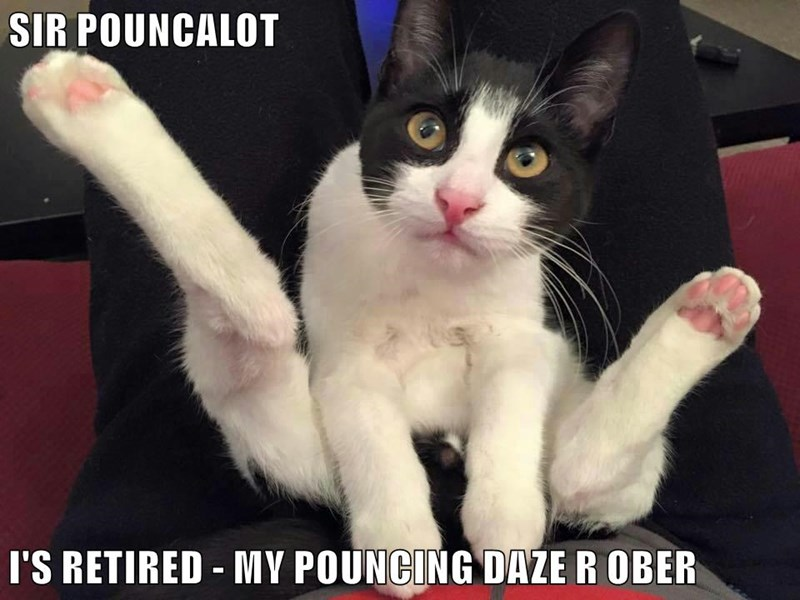 SIR POUNCALOT  I'S RETIRED - MY POUNCING DAZE R OBER