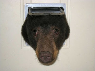 photo of bear sticking head through cat door
