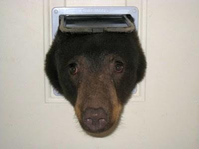photo of bear sticking head through cat door