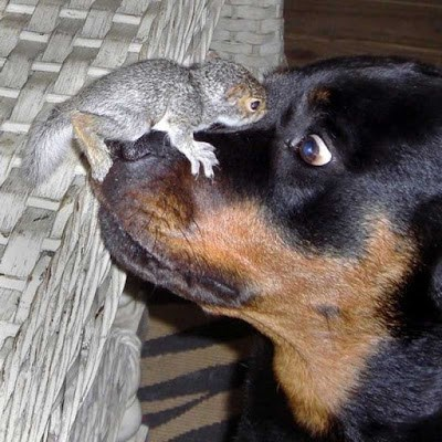 Baby Squirrel on Dogs Nose
