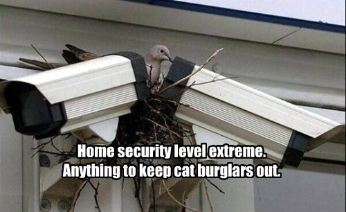 nest,birds,security camera,funny,animals