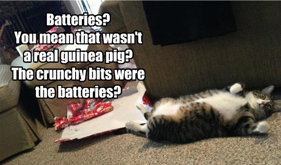 Batteries?  You mean that wasn't a real guinea pig? The crunchy bits were the batteries?