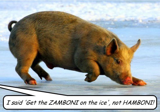 hockey pig puns ice funny animals - 8590054912
