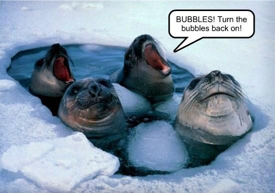 arctic hot tub seals funny animals - 8590066432