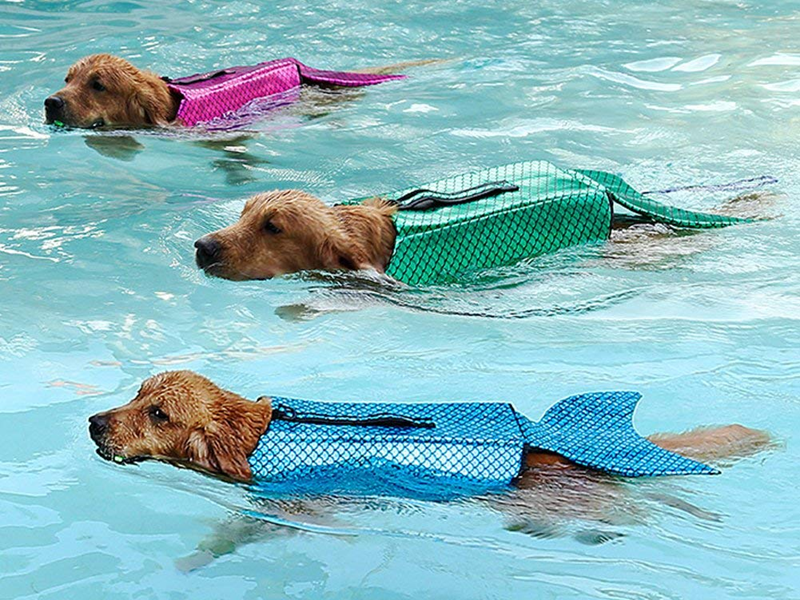 dogs with life jackets
