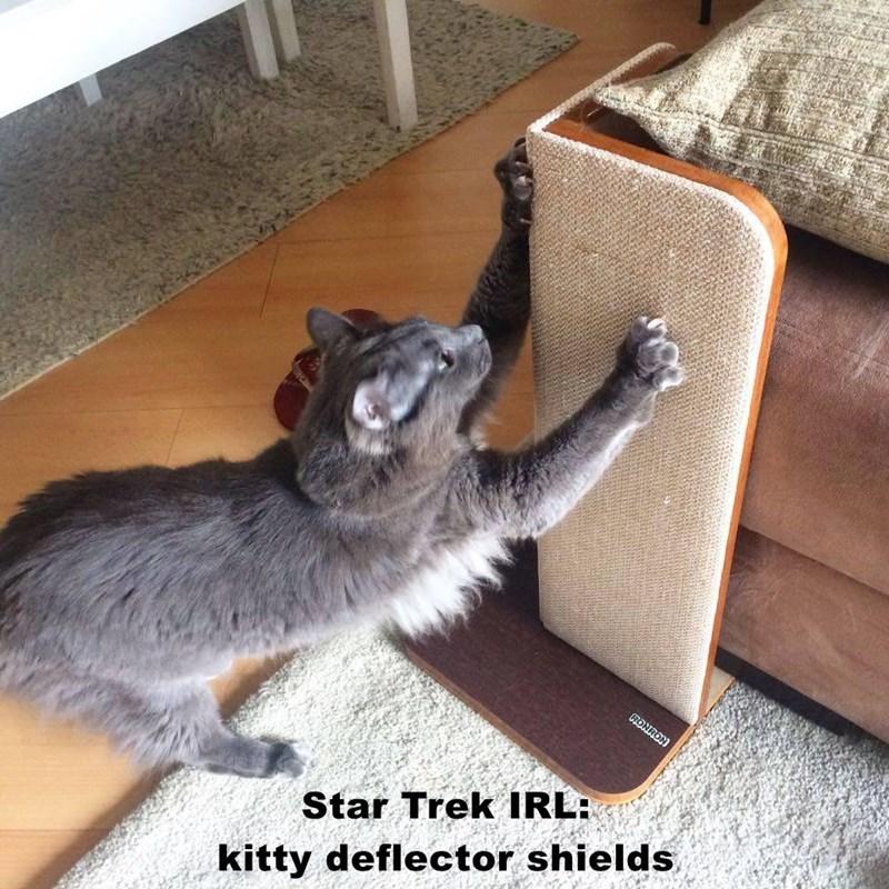 Star Trek IRL:                                            kitty deflector shields