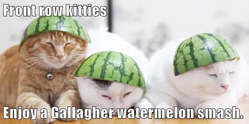 Front row kitties  Enjoy a Gallagher watermelon smash.