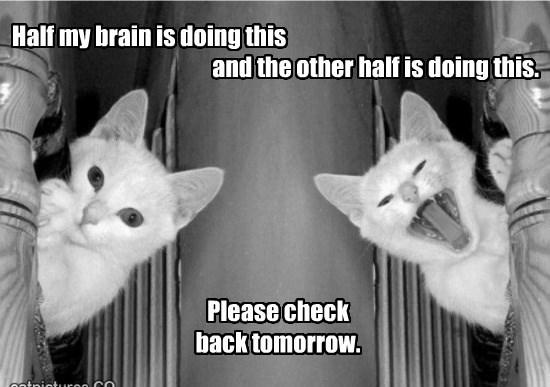 Having a bad brain day.