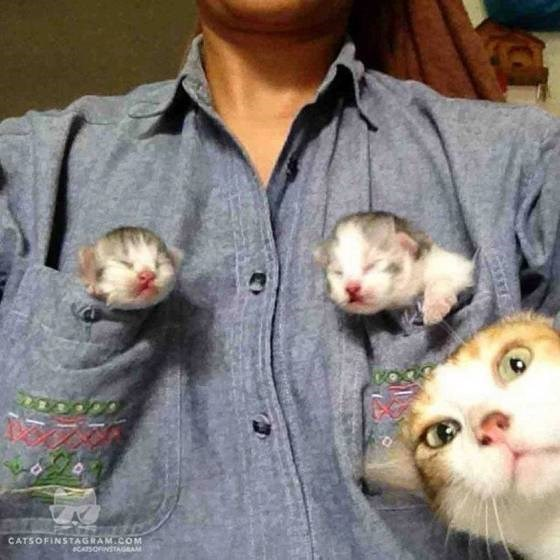 Cute Photo of Person With Kittens In Front Pockets