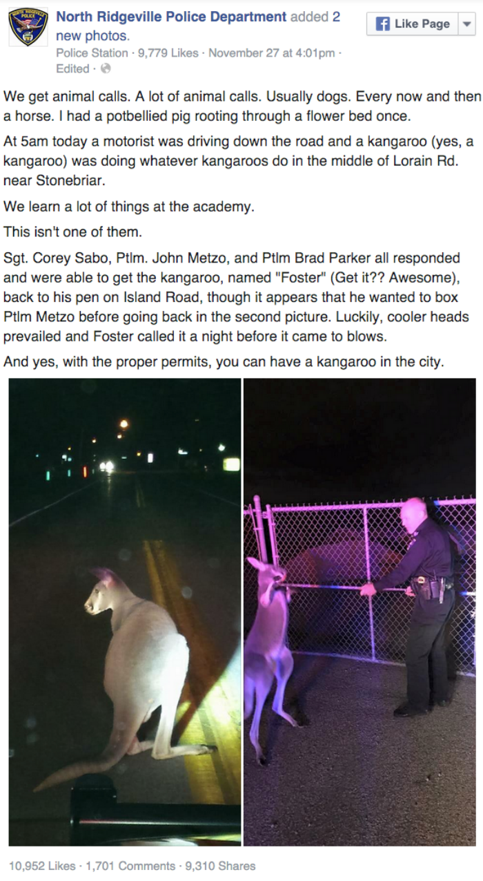 facebook Australian police called to detain hitchhiking kangaroo
