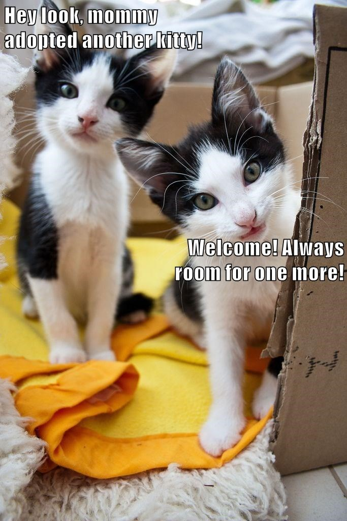 Hey look, mommy                                                                                       adopted another kitty!                                       Welcome! Always room for one more!