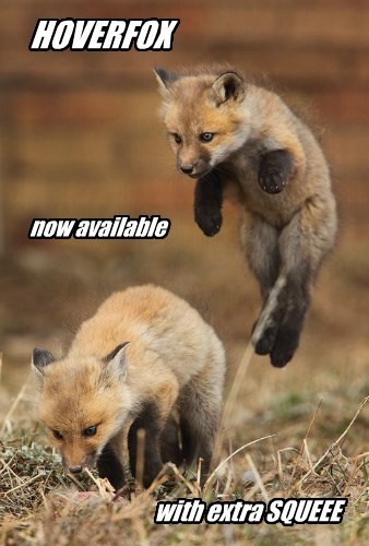 hover fox squee funny animals - 8590491648