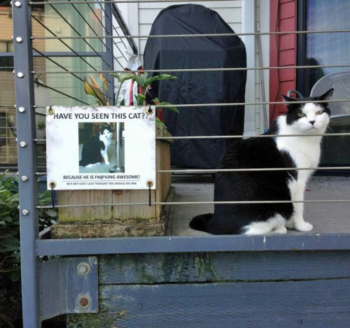 Photo of Cat Next to Poster for Missing Cat