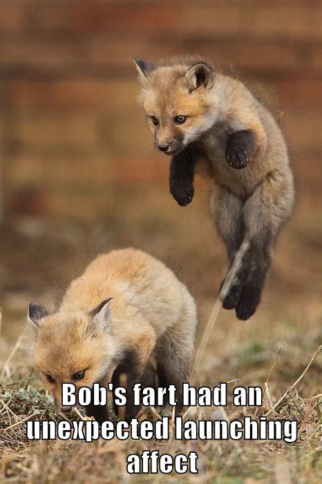 animals fox funny fart animals - 8590593792