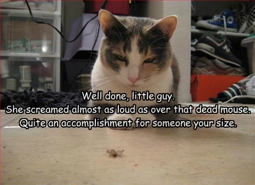 bugs caption Cats funny - 8590728704