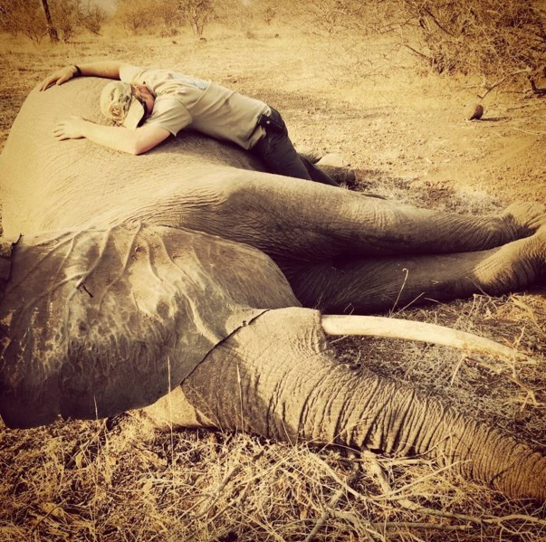 elephants conservation Prince Harry Writes Emotional Instagram Posts to Bring Attention to Poaching of Elephants and Rhinos
