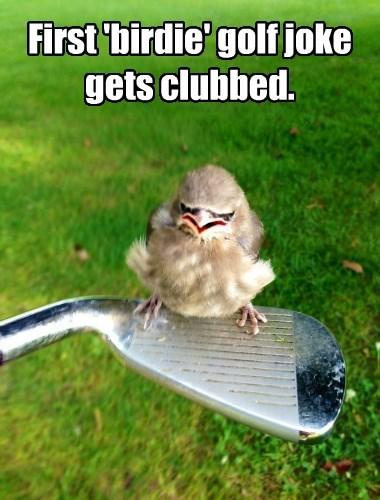 angry birds golf birdie funny - 8590770432