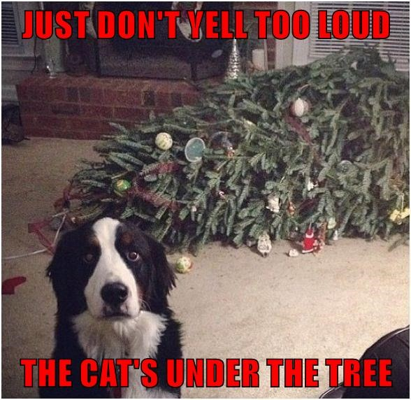 JUST DON'T YELL TOO LOUD  THE CAT'S UNDER THE TREE