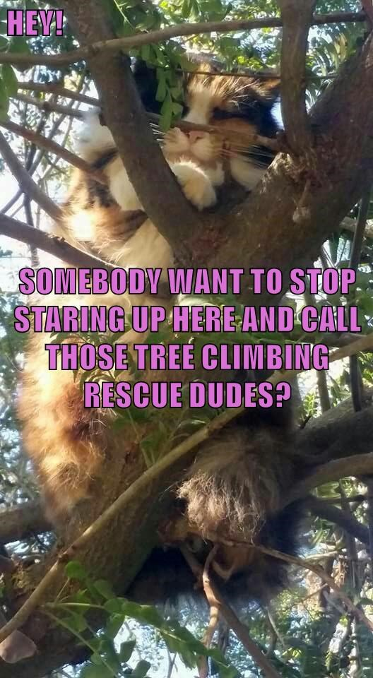 HEY! SOMEBODY WANT TO STOP STARING UP HERE AND CALL THOSE TREE CLIMBING RESCUE DUDES?