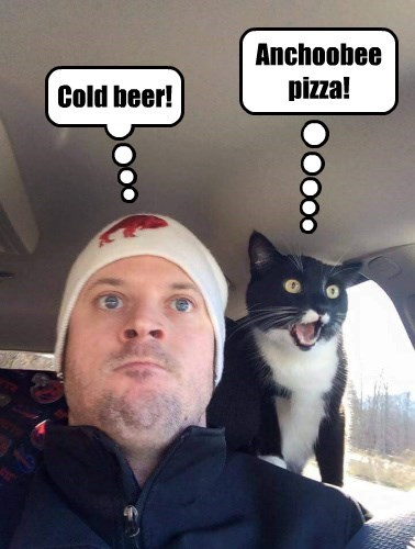 beer,pizza,caption,Cats,funny