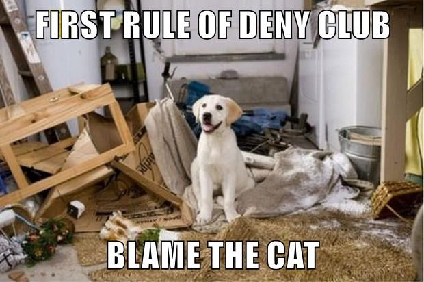FIRST RULE OF DENY CLUB  BLAME THE CAT