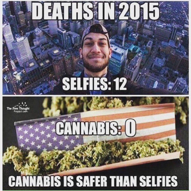 funny memes selfie vs cannabis deaths