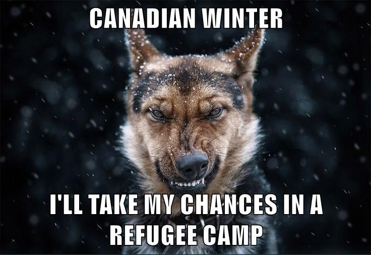 CANADIAN WINTER  I'LL TAKE MY CHANCES IN A REFUGEE CAMP