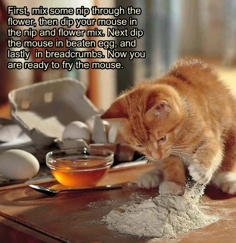 cooking recipe caption Cats funny mouse - 8591335936