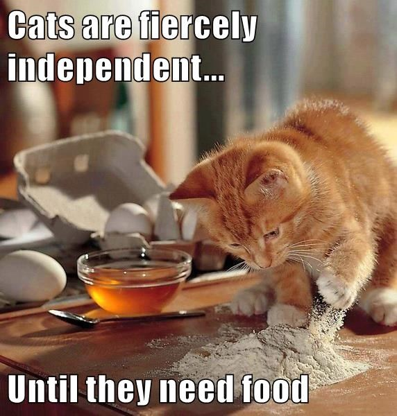 animals cooking independent caption Cats funny - 8591569152