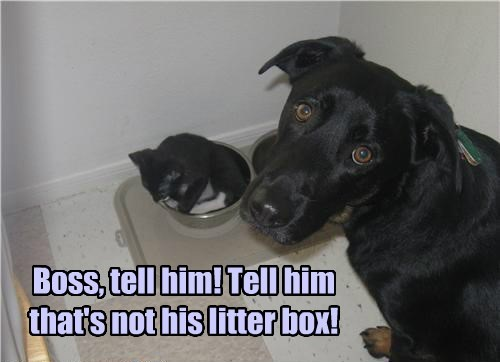 dogs,litter box,caption,Cats,funny