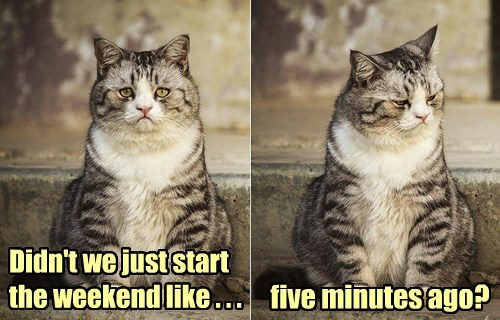 weekend caption Cats funny - 8592043264