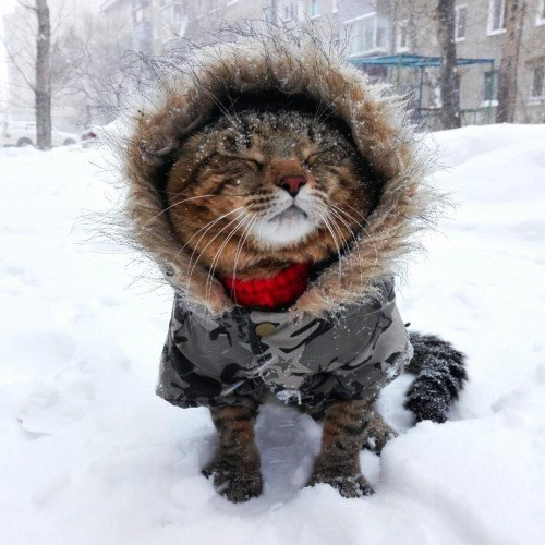 photo of cat in snow with coat on