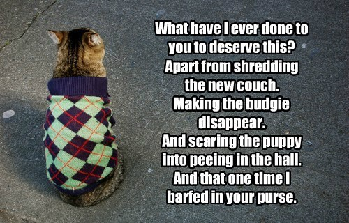 puppy sweater caption Cats funny - 8592246016