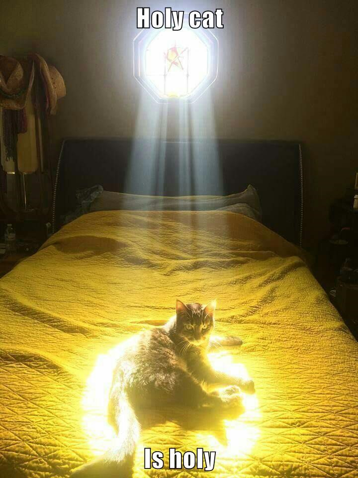 Holy cat  Is holy