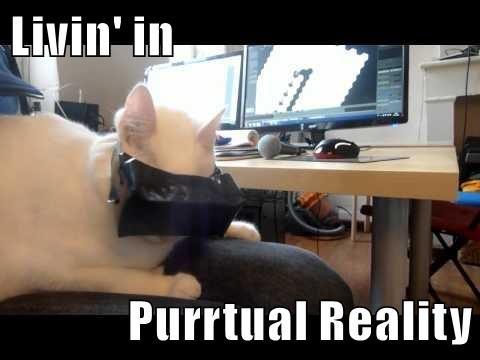 animals virtual reality caption Cats funny - 8592475904