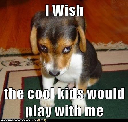 animals cool with me wish play caption
