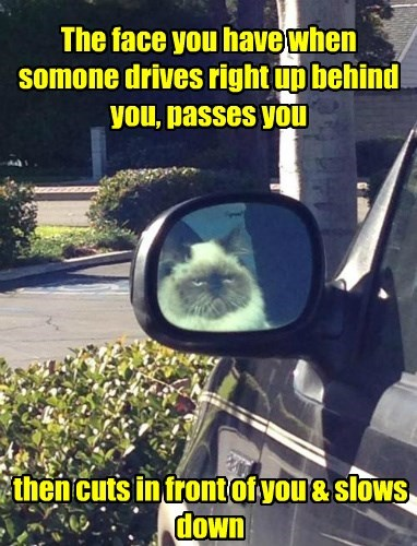 drivers ed caption Cats funny - 8592699136