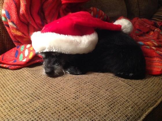 photo of dog wearing santa hat while asleep