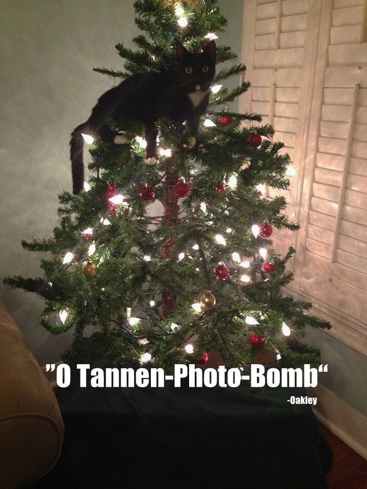 photo of cat climbing on christmas tree