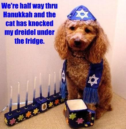 dogs hannukah caption fridge Cats funny - 8593076736