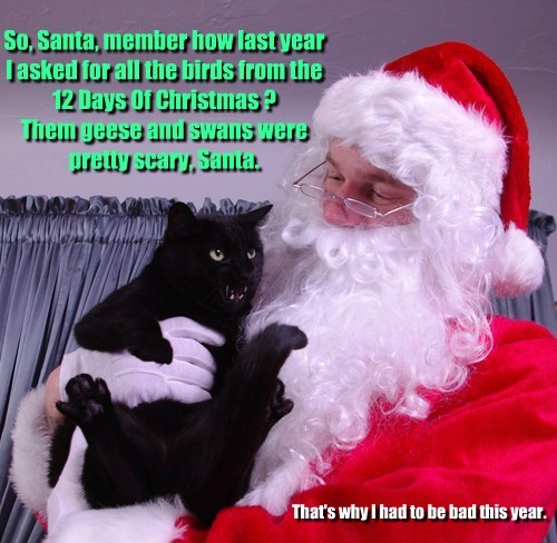 song,Christmas Carols,caption,Cats,funny