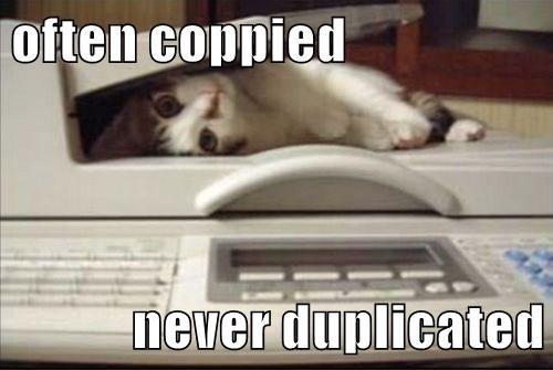 animals copy cat caption Cats funny - 8593279488
