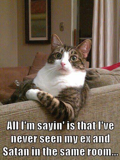animals satan caption Cats funny - 8593327104