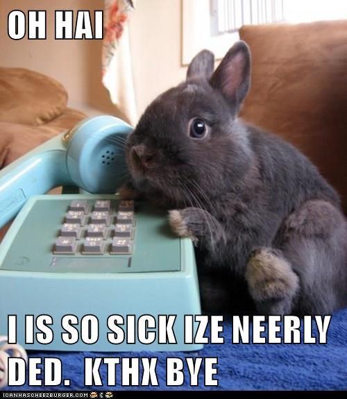 animals boss sick day telephone bunny funny - 8593422592