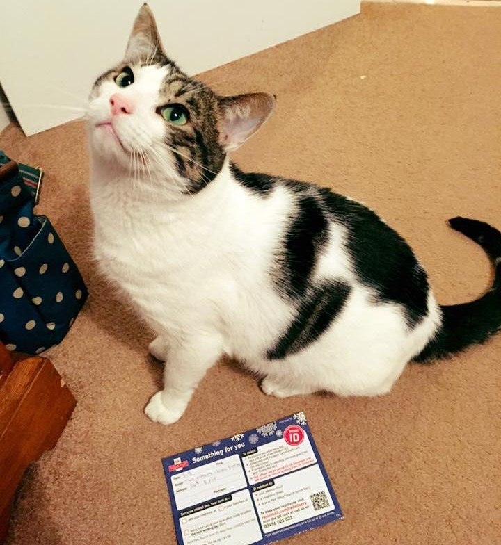 funny cats mail This Cat Needed an I.D. to Retrieve His Mail