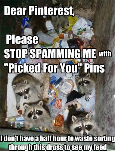 pinterest feed raccoons spam - 8593648896