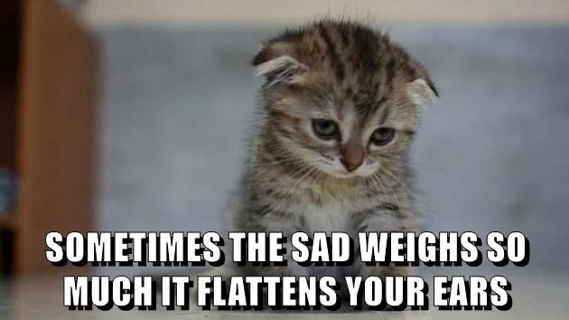 animals Sad ears kitten cute caption Cats - 8593873664