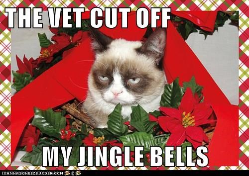 THE VET CUT OFF  MY JINGLE BELLS